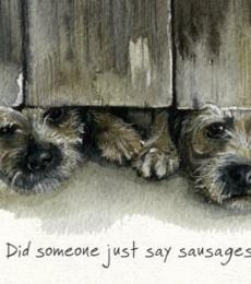 border terrier greeting card little dog laughed anna danielle