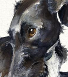 look of love lurcher greeting card little dog laughed anna danielle