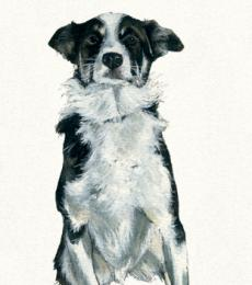 IQ collie greeting card little dog laughed anna danielle