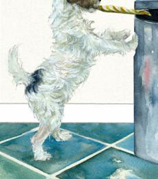 parsons jack russell x greetings card