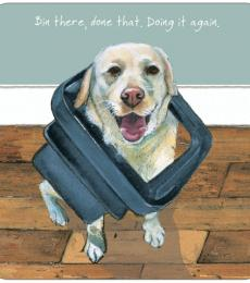 Little Dog Laughed Bin there labrador greeting card