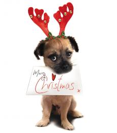 National Animal Welfare Trust Christmas Card Christmas Wishes Puppy
