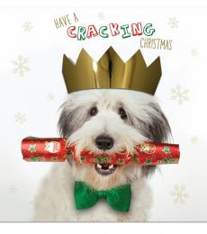 National Animal Welfare Trust Cracking Christmas Bearded Collie charity Christmas card