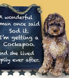 cockapoo dog card