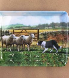border collie sheep small tray