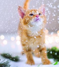 christmas cards ginger kitten in the snow