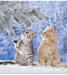 National Animal Welfare Trust Cat kittens in snow charity Christmas card