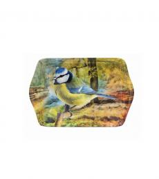 blue tit bird woodland small tray