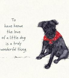 little dog greeting card little dog laughed anna danielle