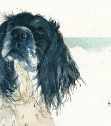 moments spaniel greeting card little dog laughed anna danielle