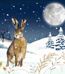 christmas hare moonlight