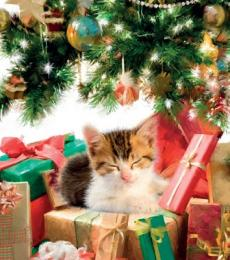 National Animal Welfare Trust Christmas Card Cat Nap tortoishell cat greeting card