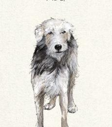 mongrel old dog greeting card little dog laughed anna danielle