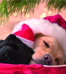 National Animal Welfare Trust Christmas Cards One More Sleep Dogs Puppies