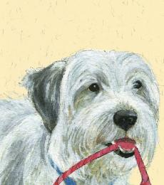 a true scruffy mutt greeting card little dog laughed anna danielle