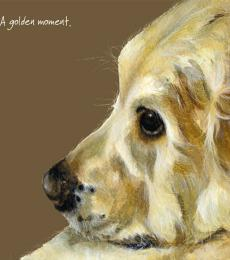 golden retriever greeting card little dog laughed anna danielle