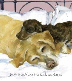 yellow labrador greeting card little dog laughed anna danielle