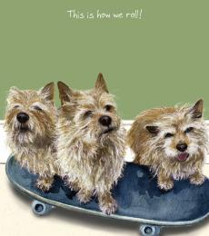 norwich terriers greeting card little dog laughed anna danielle