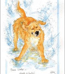 alison's animal greetings cards save water share a bath