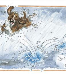 alison's animal cards springer in the rain