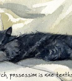 stretch little dog laughed greeting card anna danielle