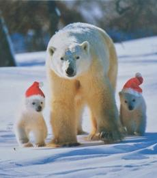 National Animal Welfare Trust charity Christmas card polar bears greeting