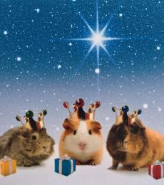 National Animal Welfare Trust We Three Kings Guinea Pig Charity Christmas card