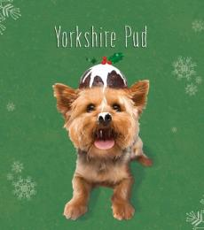 National Animal Welfare Trust Christmas Card Yorkshire Pud Christmas Pudding Yorkshire Terrier