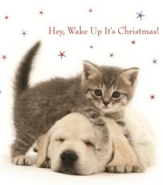 Hey Wake Up It's Christmas kitten puppy greeting card National Animal Welfare Trust