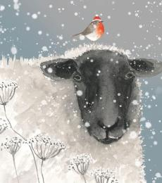 sheep robin xmas card