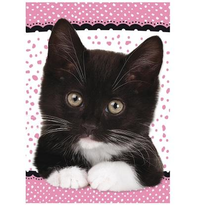 Black Kitten Notecards