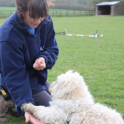 Provide animal training & enrichment for a year