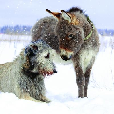 christmas cards dog and donkey