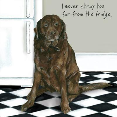 fridge stray chocolate labrador greeting card little dog laughed anna danielle