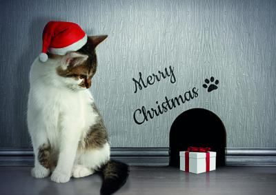 National Animal Welfare Trust Christmas Card Friends for Christmas Cat Mouse