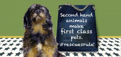 rescue rule pets card
