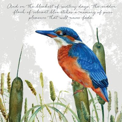 kingfisher greeting card little dog laughed anna danielle