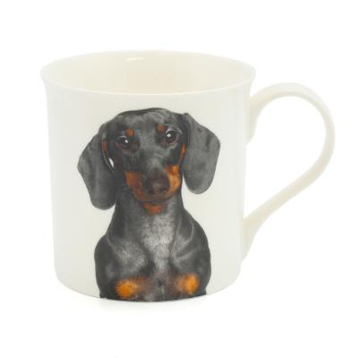 dachshund mug dog breed