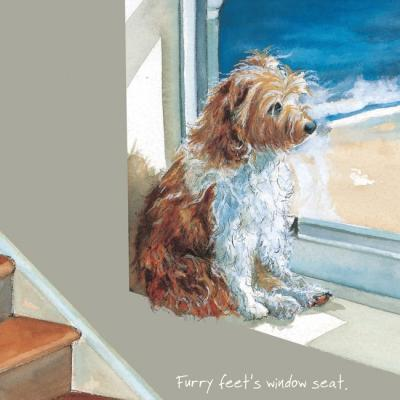 patterdale jack russell x greeting card little dog laughed