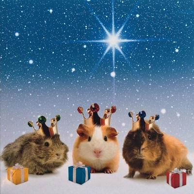 national animal welfare trust we three kings guinea pig charity christmas card - Animal Charity Christmas Cards