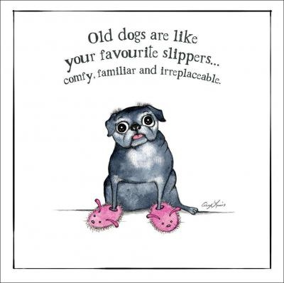 dog slippers card